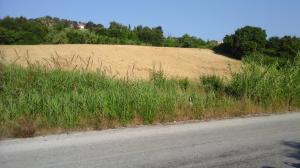 Terreno Agricolo in Vendita a San Benedetto del Tronto #3