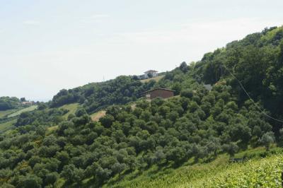 Azienda Agricola in Vendita a Montefiore dell'Aso #2